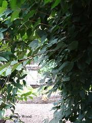 Terme Deciane 9 (Via delle) 03 (Fontaines de Rome) Tags: rome roma fountain brunnen fuente 9 via font fountains fontana fontaine rom fuentes bron terme fontane fontaines deciane viadelletermedeciane viadelletermedeciane9