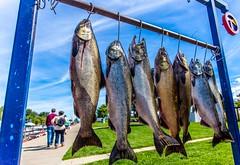 Grand Haven Salmon Festival (Explore 9-14-2013) (Mi Bob) Tags: unitedstates michigan grandhaven salmonfestival