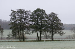 Bodenfrost (Reinhold.Lotz) Tags: deutschland hessen herbst wiesen raureif landschaften coth naturesplus romrod photosandcalendar coth5 onlythebestofflickr