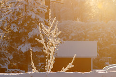 Sunshine (Matti Vinni) Tags: winter light house snow tree finland branch shine oulu