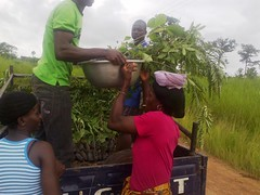Delivery of New Seedlings
