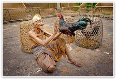 The Old Man And His Fighting Cock (Vin PSK) Tags: old portrait bali man indonesia cock fighting