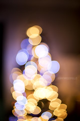 Christmas time! (Igor Henrique Bisello) Tags: christmas new tree brasil natal canon happy lights bokeh year 5d