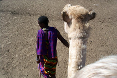 Camel-guide (romanboed) Tags: africa travel tanzania camel