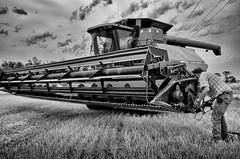 Harvest 3051 (alhawley) Tags: blackandwhite bw monochrome pentax photojournalism american kansas johndeere socialdocumentary combineharvester 2013 k01 wheatharvest pentaxlimited da21mmf32allimited pentaxlife justpentax da21mmf32limited pentaxk01 pentaxart americanabstract
