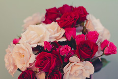 white, red, and pink mini roses (Shandi-lee) Tags: pink flowers blue light red roses white flower cute green love nature floral colors beautiful rose by canon vintage photo flora colorful warm flickr pretty colours photographer natural symbol girly teal peach fuchsia mint valentine pinky romance petal cox romantic bouquet colourful february tone valentinesday 50mmf14 hotpink naturallighting softtones photoshopactions babypink february14th canoneos7d shandilee shandileecox