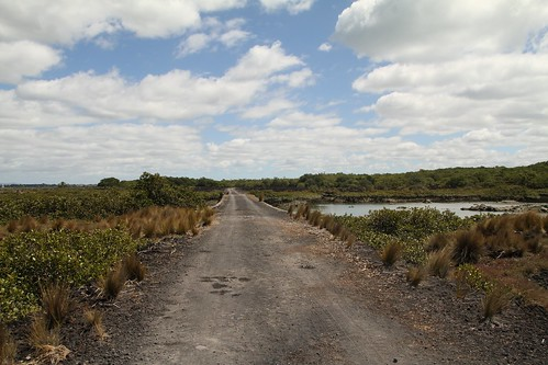 Road to nowhere (Rangitoto)
