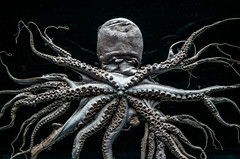 Specimen-2 (One_roo) Tags: aquarium