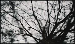 2014-02-18 16-47-27_0397 (Minh in) Tags: k nikon superia f14 200 fujifilm nikkor 50 f4
