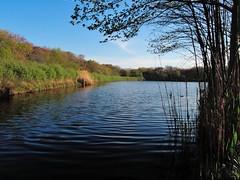 Peaceful Day (DigitalCanvas72) Tags: trees nature landscape outdoors spring bluesky clearbluesky leaveswaterlandscapenikon coolpixp340 nikonp340