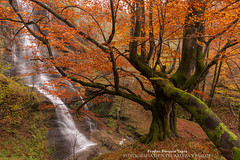 El guardian de Uguna (Pruden Barquin) Tags: colors forest landscape paisaje colores tone hayas cascada tripode bosques polarizador tonos otoñal nikkor1835 triopo nikond610 prudenbarquin