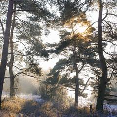 Forest light - Landscape (PHOTOPHOB) Tags: winter sunrise lumix frost panasonic g6 wald morgenlicht venusberg aidlingen heckengu photophob dmcg6