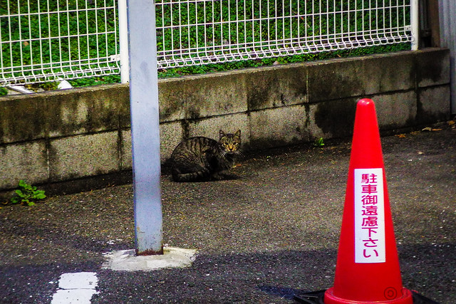 Today's Cat@2015-01-28