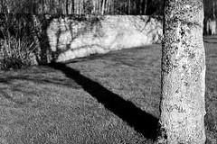 mon vrai silence (Nicolas Fourny photographie) Tags: trees blackandwhite bw france nature canon landscape 50mm lightandshadows noiretblanc beautifullight nb paysage vexin 600d