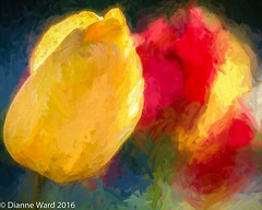 Day 131/366 (Tewmom) Tags: abstract tulips tulip impression topaz day131366 topazimpression 366the2016edition 3662016 10may16