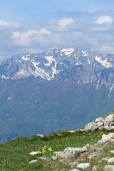 Monte Carega (Tabboz) Tags: panorama primavera erba montagna strade cima prati vetta pascoli prealpi fioriture