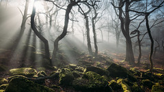 New arrivals (J C Mills Photography) Tags: wood morning trees light england mist forest woodland landscape moss spring oak rocks derbyshire peakdistrict rays sunrays sunbeams gritstone sessileoak