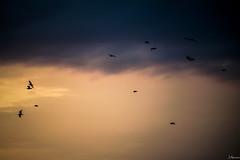 Libre, en una altura exclusiva. (juliosabinagolf.) Tags: sky espaa fly nikon explore cielo nikkor nube comunidadespaola d3300