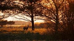Sunset (pszcz9) Tags: polska poland przyroda nature zachódsłońca sunset zwierzę animal drzewo tree pejzaż landscape wiosna spring sony a77 beautifulearth