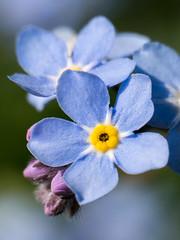 2016-05-18-001-MaMa - Augsburg - BoGa - 0075 - C00001s - H1080 (mair_matthias_1969) Tags: plant flower macro lumix blossom outdoor pflanze panasonic nophotoshop blume makro blte g7 g70 mft retroadapter extensionrings umkehrring zwischenringe retroadaptor nodirtytricks microfourthirds dmcg7 lumixg7 lumixg70 dmcg70 gvario14140f3556 ohneschmutzigetricks keineschmutzigentricks automaticadaptor automaticmountextender automatikadapter automaticextender automatischerextender
