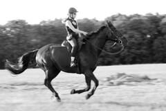alte Reiterfaustregel (feldweg) Tags: woman caballo cheval rider cavallo pferd horseback reiten hest kon galopp reiterin sattelgurt