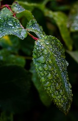 one choice-5 (davidkerns12) Tags: flowers water rain one droplets choice