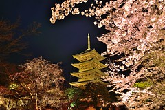 , Kyoto, Japan (Vincent_Ting) Tags: sky reflection japan cherry pagoda spring kyoto   sakura pavilion cherryblossoms kansai buddhisttemple cherrytree  wast            touristdestination  templt    thefivestorypagoda   vincentting