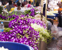 (by claudine) Tags: world flowers orchid green asian thailand travels colorful asia dof purple market photos bangkok vibrant unique culture tourist exotic thai attraction customs expat travelphotography pakklongtalad yodpimanflowermarket byclaudine