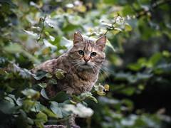 Street cat 147 (Yalitas) Tags: pet cats cat canon kat feline chat kitty gato felino katze katzen kot kedi kass gatta streetcat kotka  kocka  katte  katzchen kottur