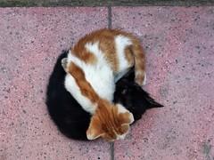 20160601_121715 kardesce (UgurK) Tags: street cats cat fraternity kedi sokak kardelik