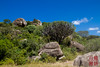 Candelabra Tree (DragonSpeed) Tags: africa rock landscape tanzania safari tz kopje serengetinationalpark shinyanga seroneraregion tzday03 africanwildcatsexpeditions