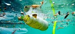 Balığa Giden Çöp (felsefesite) Tags: deniz balık modernite çöp çevre kirlilik tüketim küreselleşme insanlığınsorunları tüketimkültürü insanlıksorunu