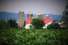 IMG_3811 (joyannmadd) Tags: amish lancaster pennsylvania farm corn coumty kitchenkettlevillage pa intercourse farms nature outdoors