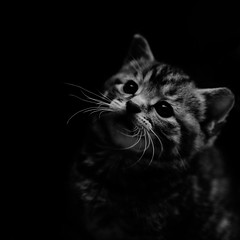 With New Eyes (karmakerosene) Tags: blackandwhite pet cute monochrome animal cat 35mm square nikon kitten feline kitty aww furbaby kittycat babyanimal d7000 nikond7000