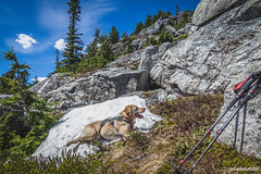 First snow patch (johnwporter) Tags: mountains nationalpark labrador yellowlab hiking mountainclimbing wideangle cascades mountaineering blacklab wilderness pnw 山 scramble northcascades northcascadesnationalpark peakbagging wideanglelens 國家公園 爬山 徒步 登山 拉布拉多 northcascadeshighway 爬行 廣角 荒野 davispeak 廣角鏡 rosslakenationalrecreationarea stephenmatherwilderness tokinaaf1116mmf28 atx116prodx 戴維斯峯 northwestisbest 羅斯湖國家遊樂區 北喀斯喀特山脈 北喀斯喀特山脈公路 北喀斯喀特山脈國家公園 upperleftusa 黃拉不拉多 黑拉不拉多 太平洋西北部 喀斯喀特山脈 美國左上角 西北部最好 捕峯 史蒂芬馬瑟荒野