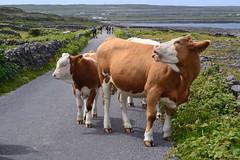DSC_1009 (kulturaondarea) Tags: viajes irlanda bidaiak