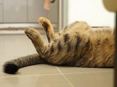 DSC09367S (lazybonessss) Tags: leica cat kitten nana summicronm50 sonya7 sonyilce7