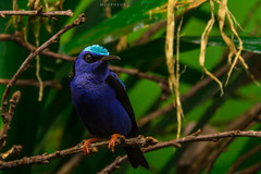 Blue Bird (Morpheus Photography) Tags: wood travel blue plants plant color green bird beautiful animal canon wings wildlife small shy