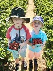 185/366 (grilljam) Tags: summer seamus ewan iphone 4yrs strawberrypicking takenbydaddy 366days fairwindsfarm 65yrs july2016