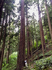MKRF old growth (thecalvinlee) Tags: ca canada britishcolumbia mapleridge