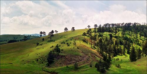 Zlatibor hill