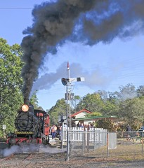 QPSR smoke and steam (Photos by Lance) Tags: railfans geotagged people ipswichqueensland passengertrain smokeandsteam steamtrain steamlocomotive trainqueenslandrail qr bundambatoswanbank photo queenslandaustralia heritagetrain railman tracks railroad station