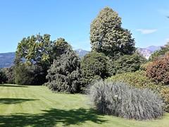 isole borromee (24) (giangian239) Tags: lago acqua blu giardino maggiore albero verde prato statua monumento isola isole borromee madre bella superiore panorama paesaggio lungolago