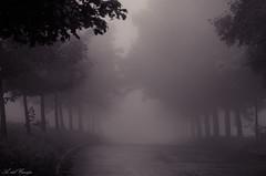 Foggy road (A. del Campo) Tags: road trees light blackandwhite espaa naturaleza mist blancoynegro luz nature fog landscape lights monocromo blackwhite spain nikon rboles shadows camino naturallight asturias paisaje bn verano nikkor oviedo sombras niebla luznatural nikond7000