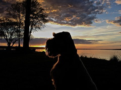 Rocco Looking Prestigious (ChadCooperPhotos) Tags: sunset summer dog sun lake cute art water clouds puppy landscape photography photo spring