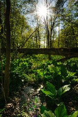 Jungle (John Bradtke) Tags: trees sunset sky plants sun tree nature spring mud michigan wideangle 1024 nikond300