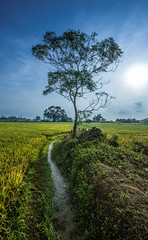 I like this place and could willingly waste my time in it. (Ravick@nth) Tags: india tree water field creek sunrise canal village stock earlymorning fresh greenery chennai tamilnadu irrigation paddyfield freshwater flowingwater stockimage thirumazhisai