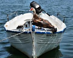Mascot (Stephen Whittaker) Tags: greek boat duck fishing nikon mascot rhodes d5100 whitto27