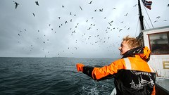 Throwing bait. Photo: Robert Selfors (opplevtrondelag) Tags: seagulls coast boat fishing fishermen crab pots fishingboat krabbe trndelag fosen trondelag teiner midnorway norwegiancoast norwegiancoastline reiseliv coastalnorway stjrnfjorden dysysund stjoernfjord norwegianfishing dysoeysund