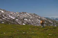 Cam a Covadonga (faltimiras) Tags: trekking europa pics leon peaks picos asturies caminada